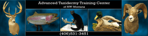 Advanced Taxidermy Training Center logo