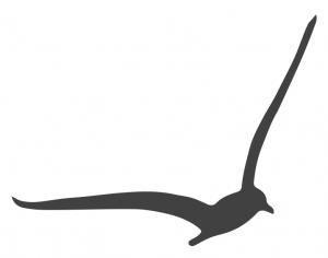 Pacific Center for Awareness & Bodywork logo
